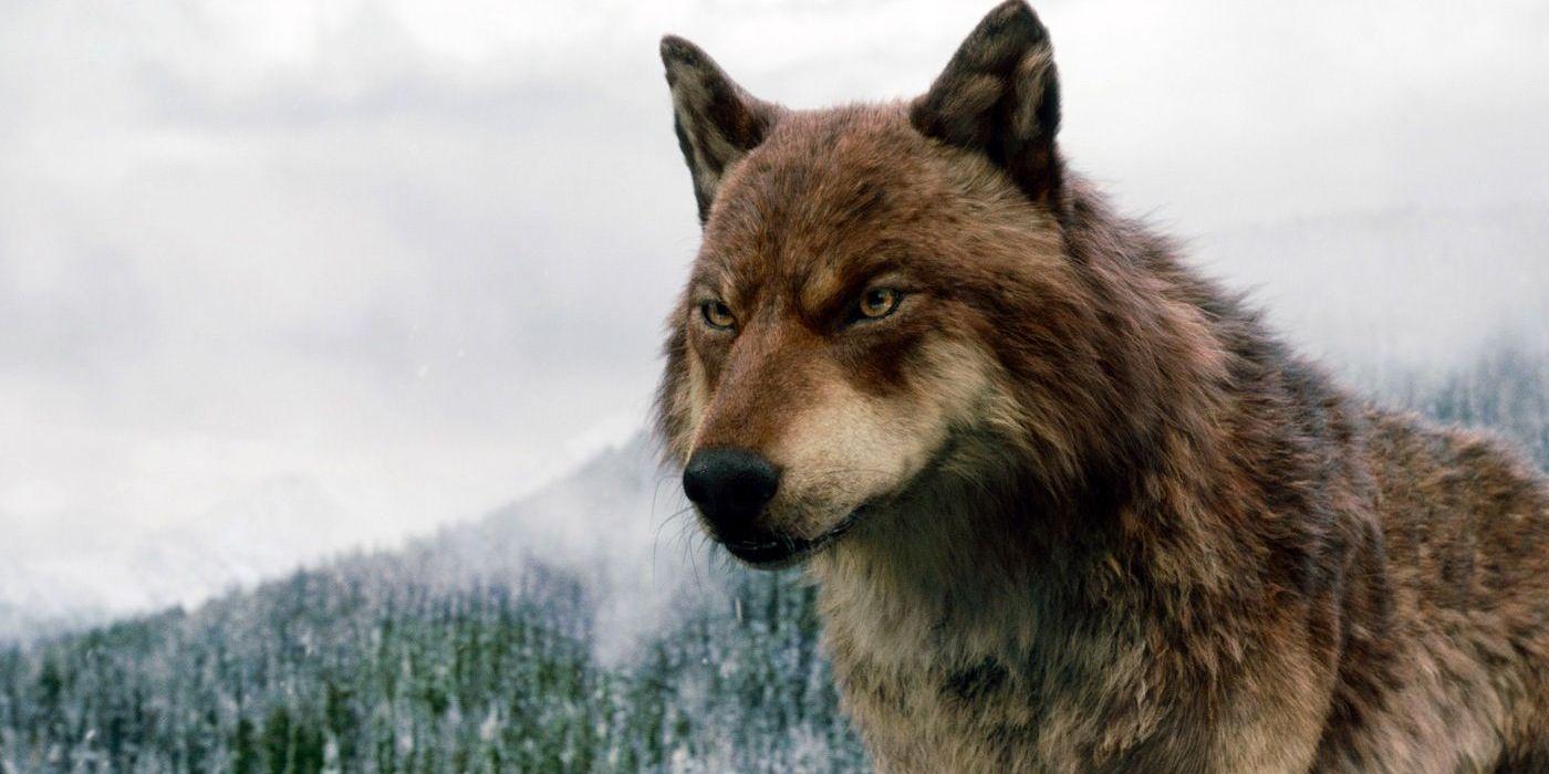 Werewolf Physiology, According to the Twilight Movies   CBR
